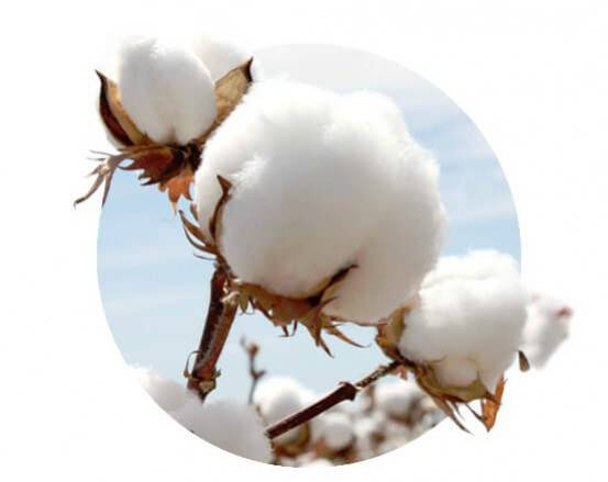 It's going to be Cotton.; Choose well your Cotton?